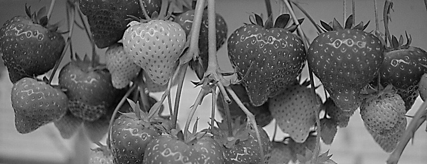Brookberries & Dings Aardbeien